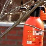 Как укрыть молодой абрикос на зиму