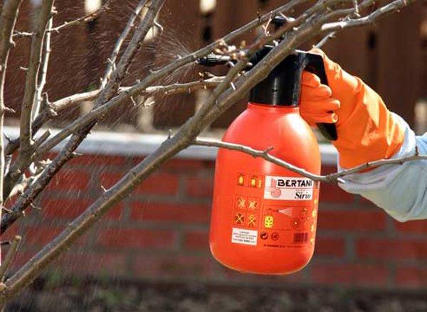Использование распылителя при опрыскивании яблонь фото