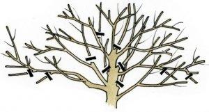 схема брезки дерева