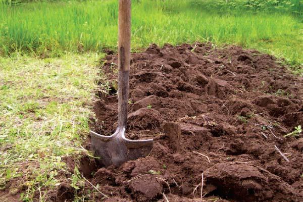 Перекапывание - подготовка почвы под посадку яблони фото