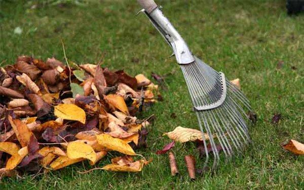 Уборка опавших листьев профилактика против парши фото