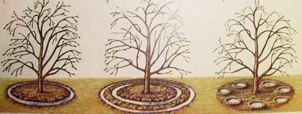 Схемы полива вишни фото