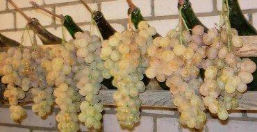 Хранение винограда на зеленых гребнях фото