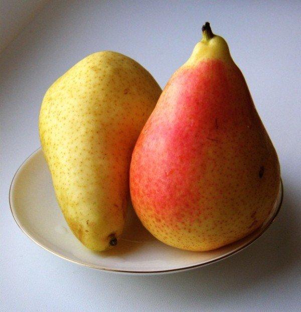 Плоды груши Бергамот Осенний фото