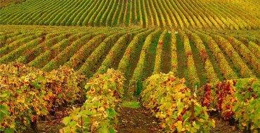 Осенняя обработка винограда фото