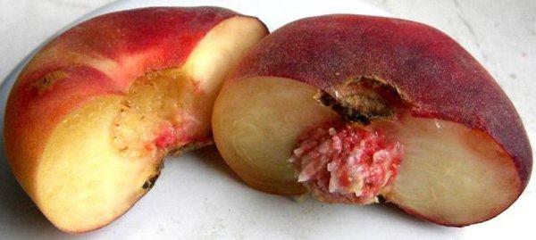 Инжирный персик сорта «Никитский плоский» фото
