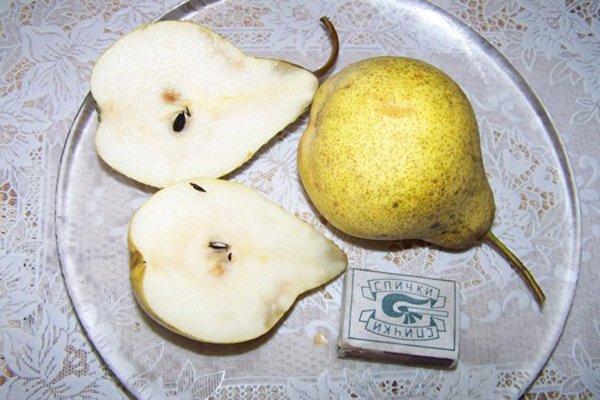 Сравнительные размеры груши «Просто Мария» фото