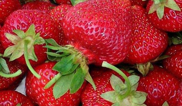 крупные плоды клубники