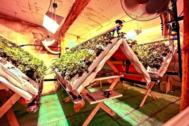Ферма по выращиванию клубники на гидропонике