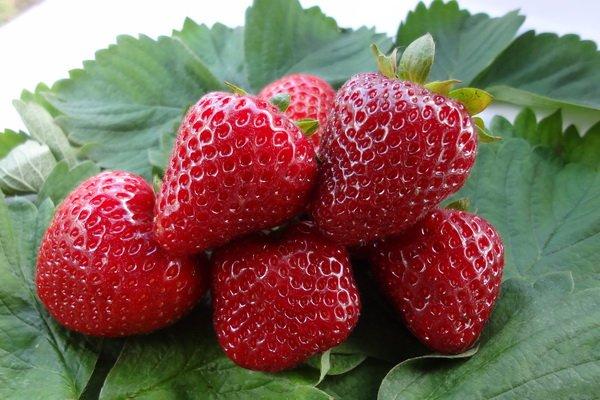 Плоды крупноплодной клубники Диамант