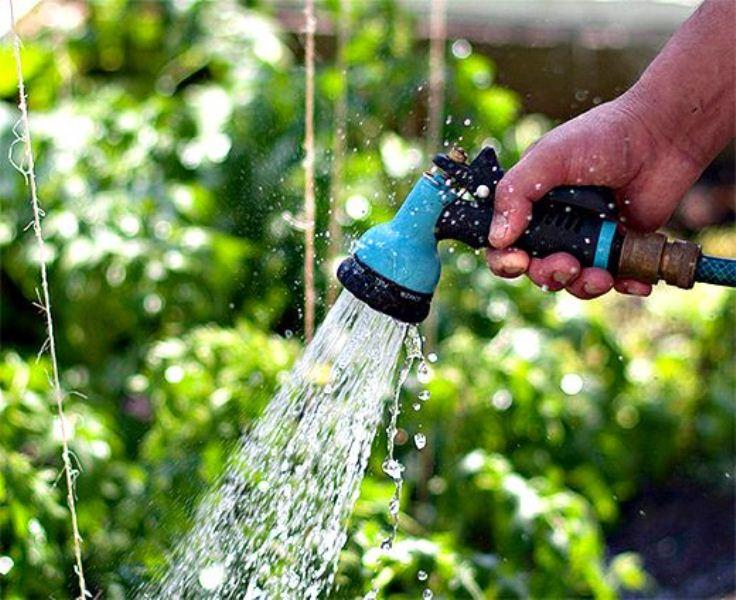 как обеспечить полив в теплице
