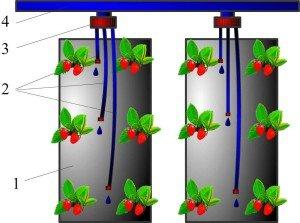Схема посадки клубники в мешки