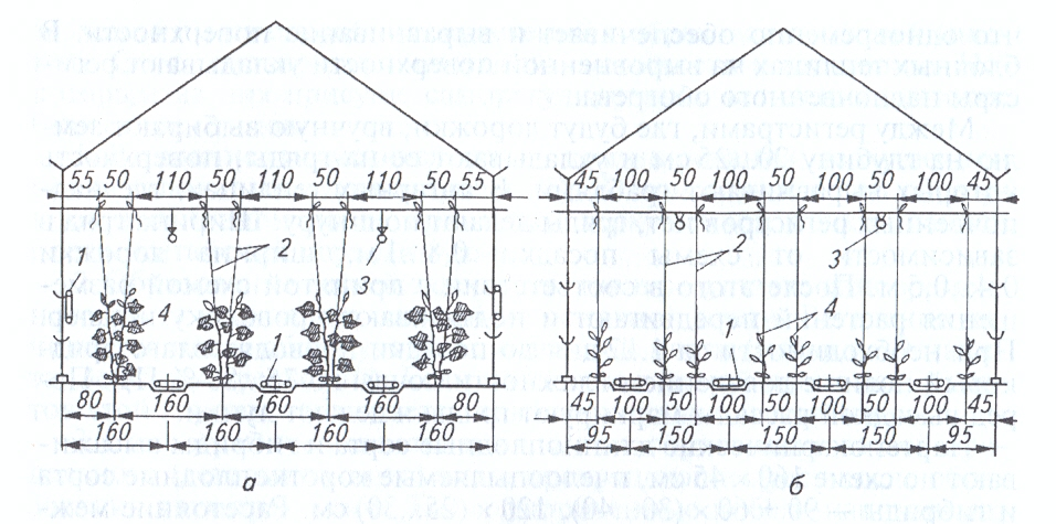 Схема посадки огурца в теплице