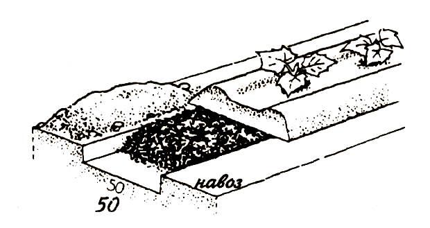 Схема строения навозной грядки