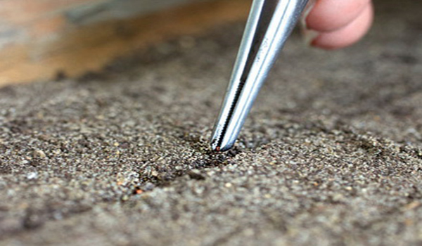 высаживание семя клубники в подготовленную почву