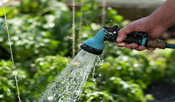 процесс полива огурца в открытом грунте