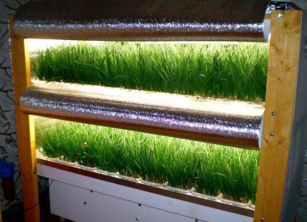 гидропонная система выращивания лука
