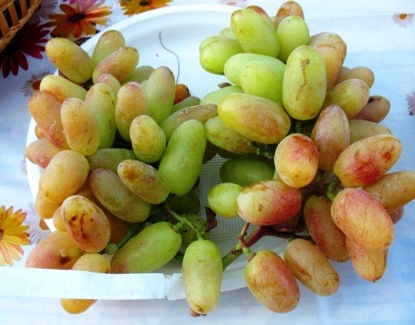 гибридный сорт винограда