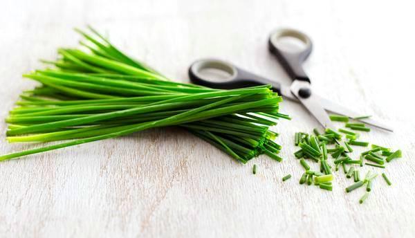 лук-шнитт входит в состав многих блюд