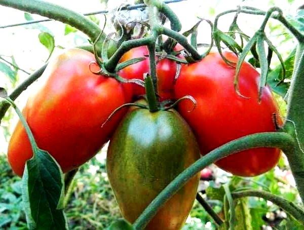 сорт гигант Де Барао плоды