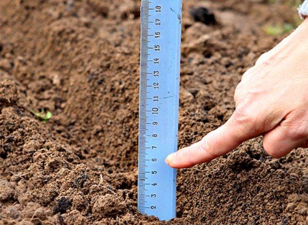 определение глубины посадки семян лука
