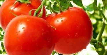 помидоры Санька