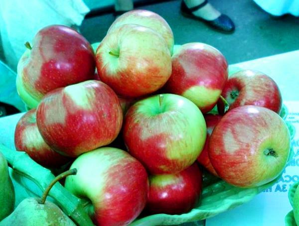 Созревшие яблоки на выставке