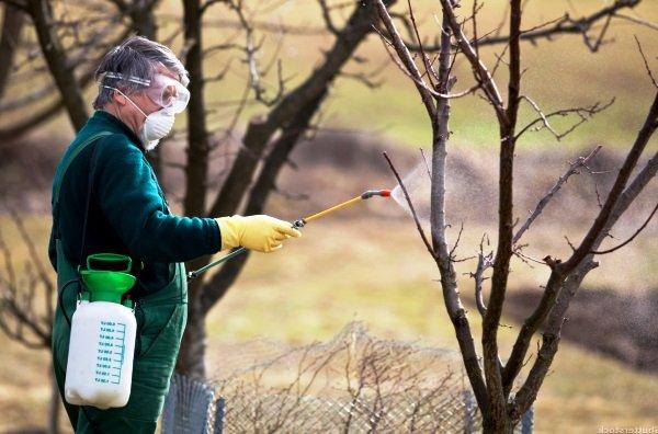 Побелка деревьев с помощью распылителя