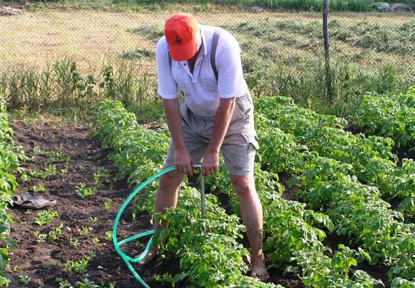 Полив огорода для улучшения урожайности