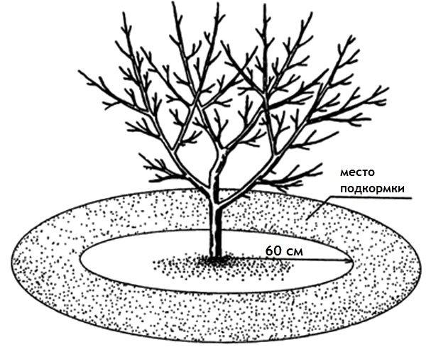 Подкормка минералами для яблони