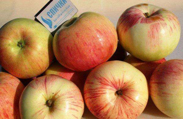 Яблоки сорта Орловский пионер