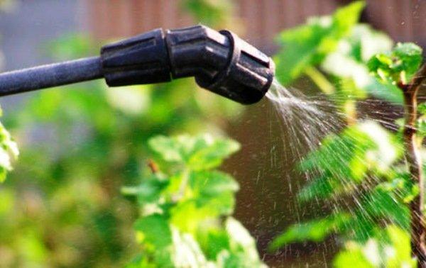 Инструмент для обработки растений