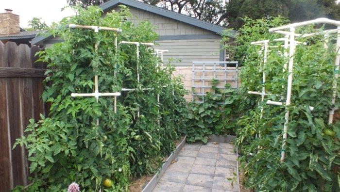 Клетки для подвязывания помидоров