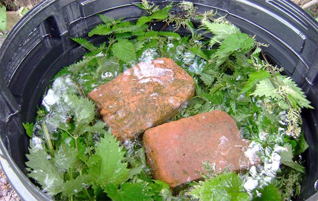 Удобрение из дрожжей и крапивы