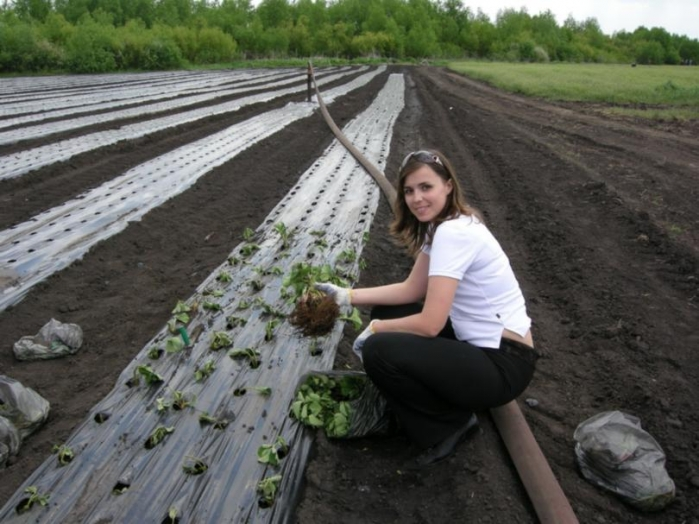 Женщина высаживает рассаду помидор