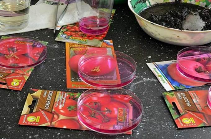 Марганцовка для обработки рассады помидор