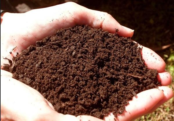 Как правильно подготовить почву для выращивания рассады