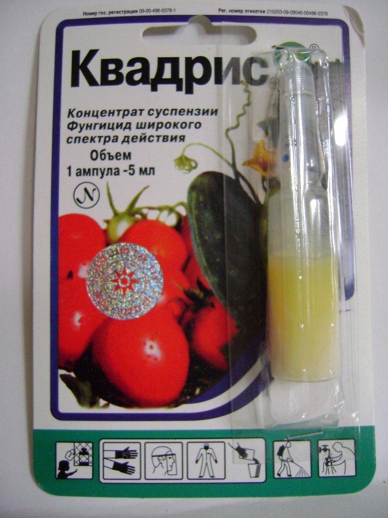 Квадрис для лечения фитофтороза томатов