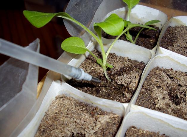 Инструмент для образования лунок для рассады томатов