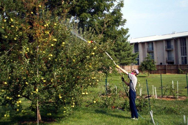 Мужчина проводит опрыскивание яблони