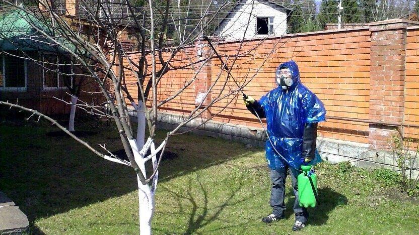 Мужчина опрыскивает яблоню без листьев