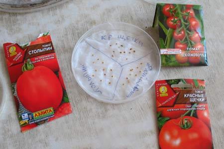 Фото замоченных семян томатов