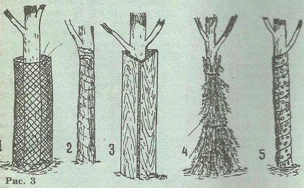 Разные методы укрытия персика на зиму