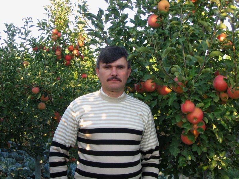 Мужчина возле яблони Чемпион