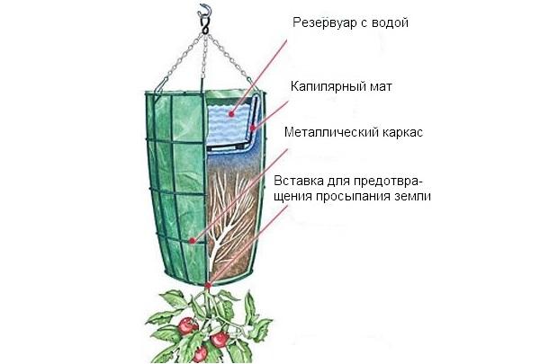 Схема бочки для выращивания томатов вниз головой