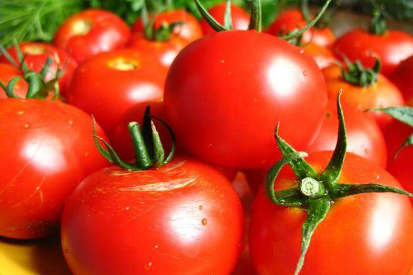Самые скороспелые сорта томатов для теплиц