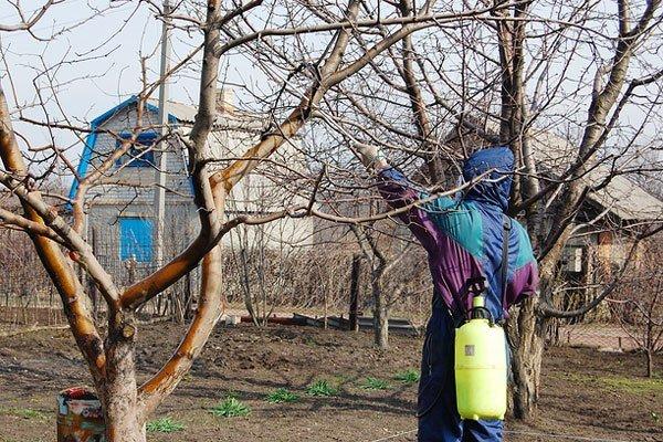 Мужчина обрабатывает дерево специальным раствором