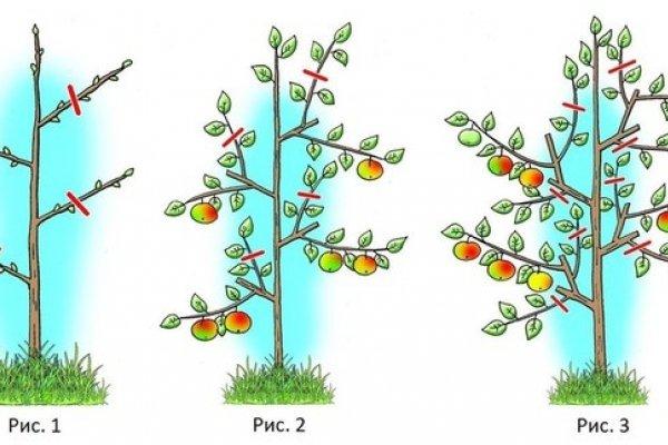 Схема формирования кроны персика