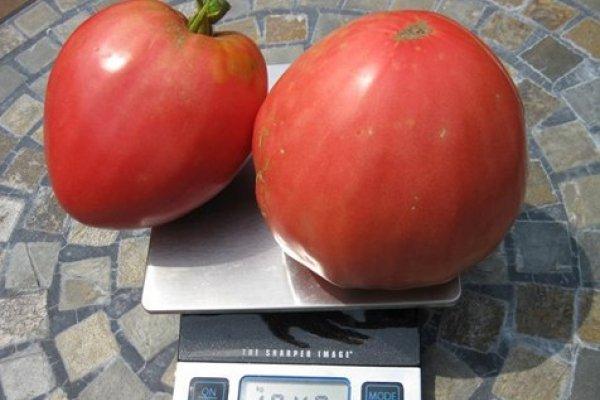 Две помидоры сорта Золотой мед
