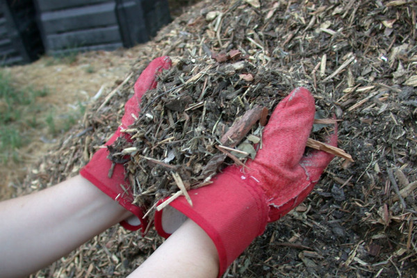 Мульчирование проводят для улучшения структуры почвы